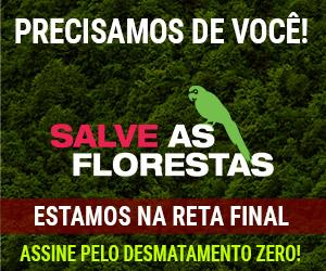 Precisamos de você! Salve as florestas. Assine pelo Desmatamento Zero!
